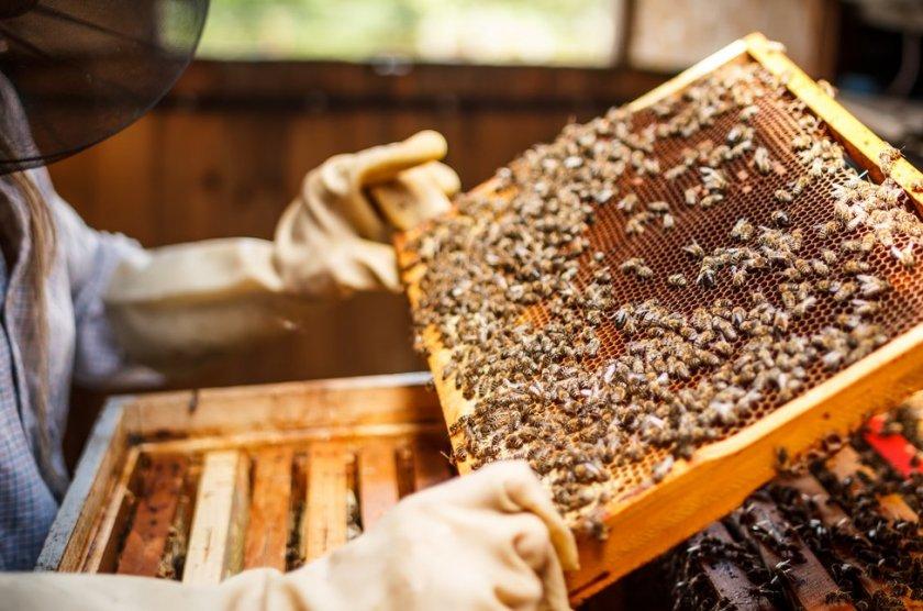 Инновации в пчеловодстве