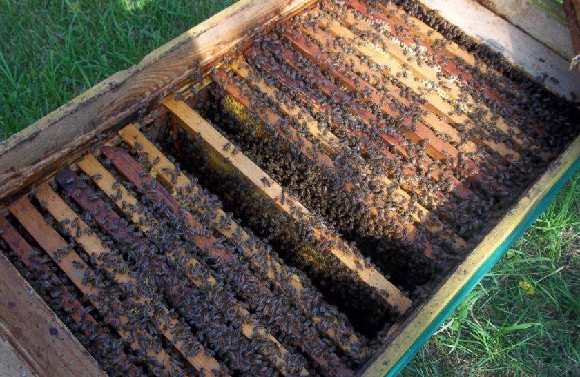 Содержание пчёл в улье-лежаке