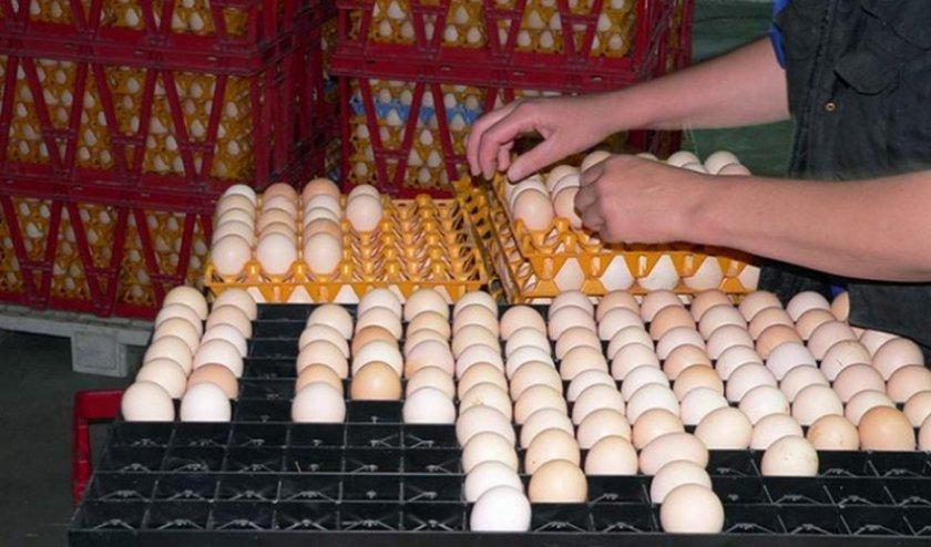 Выбор яиц