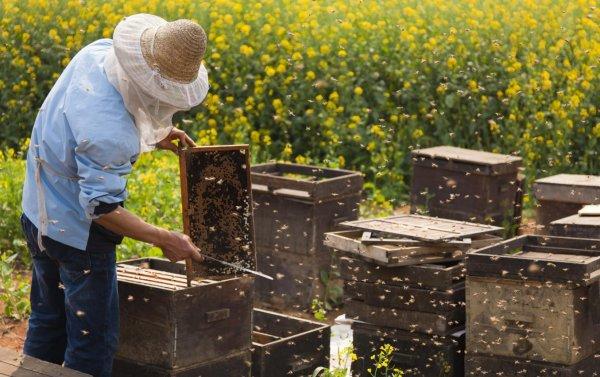 Пчеловодство для начинающих с нуля: основы, что нужно