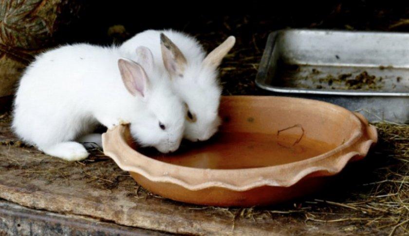 Йод для кроликов