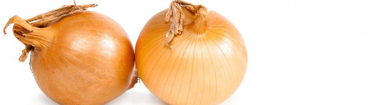 Особенности посадки и выращивания лука Центурион