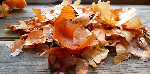 Отвар луковой шелухи: польза и вред, рецепт приготовления