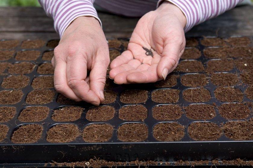 Посев семян на рассаду