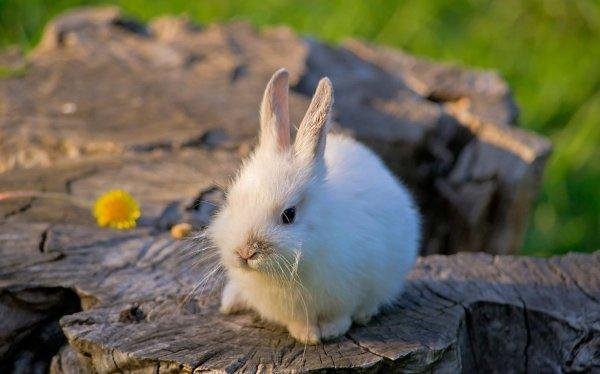 Сколько раз в день кормить новорожденных крольчат