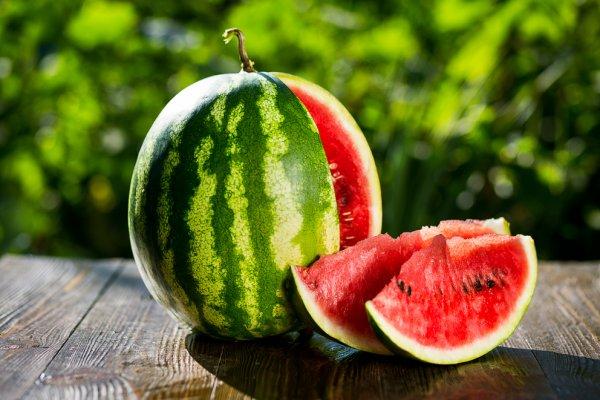 Описание сорта арбуза Холодок и особенности его выращивания сбор и хранение урожая
