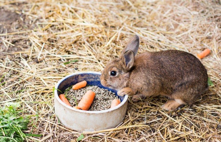 Кормление крольчат