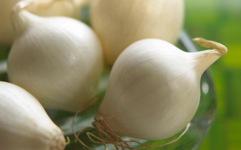 Полезные свойства белого лука