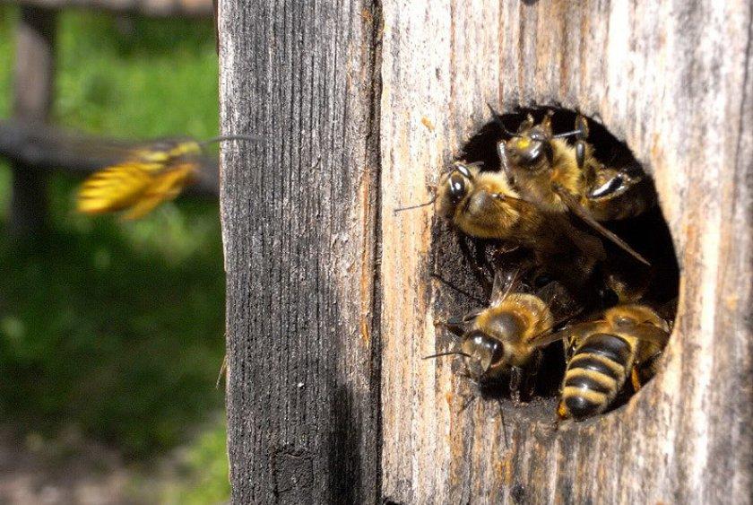 Поведение пчел осенью
