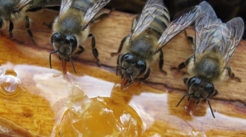 Подкормка пчёл осенью