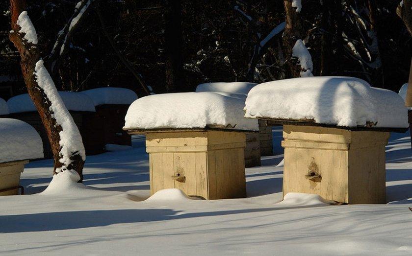 Подготовка пчёл к зимовке
