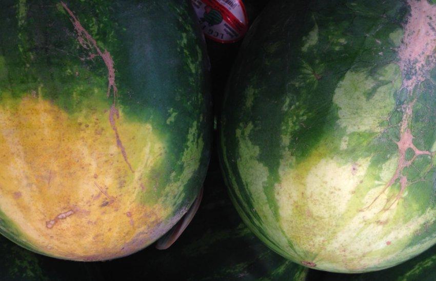 Земляное пятно на арбузах