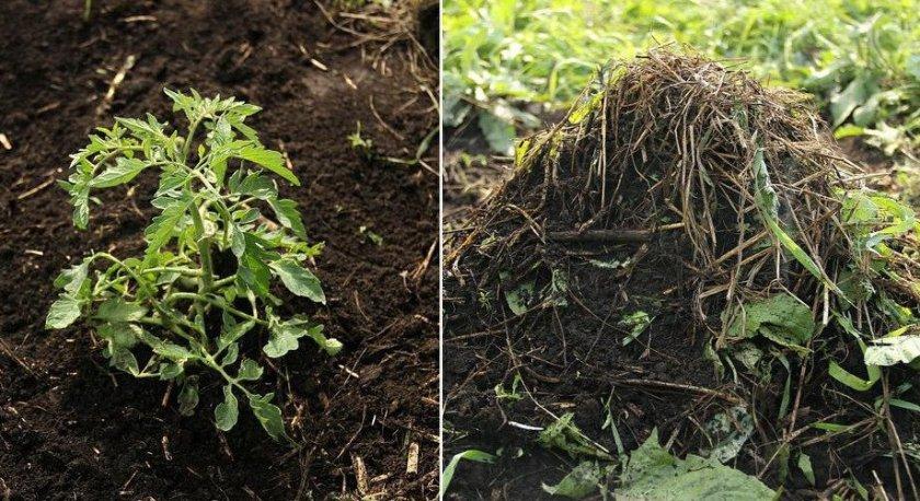 Прополка и рыхление почвы