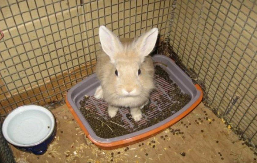 Кролик в лотке