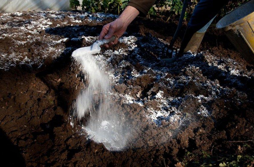 Подготовка участка для высадки рассады