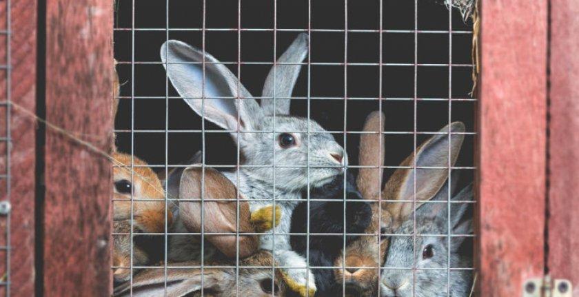 Содержание кроликов в клетках