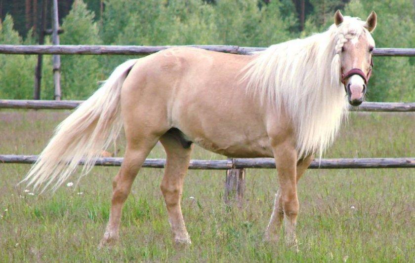 Использование башкирской лошади