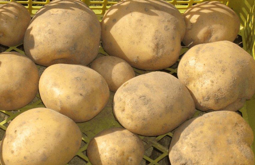 Картофель Веснянка