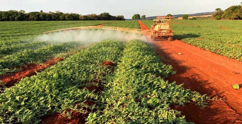 Обработка арбузов от вредителей и болезней