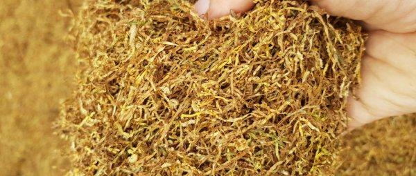 Как сушить листья табака для курения