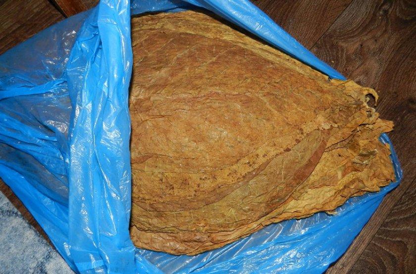 Ферментация табачных листьев