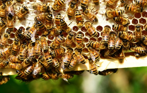 Содержание пчел в многокорпусных ульях – технология и методы пчеловождения
