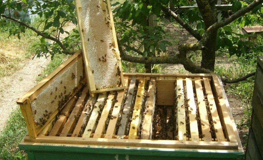 Улей с пчёлами