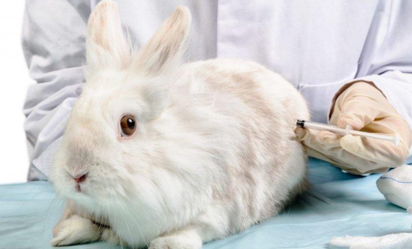 Укол для кролика