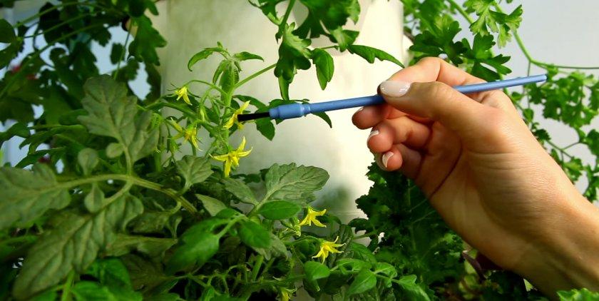 Опыления томатов