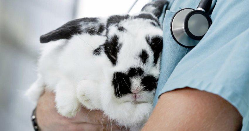 Диагностика кролика