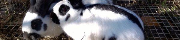 Как сделать поилку для кроликов из пластиковой бутылки своими руками