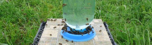 Поилки для пчел своими руками