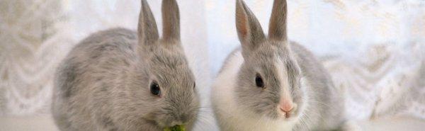 Клетки для декоративных кроликов: сколько стоит, сделать своими рукми