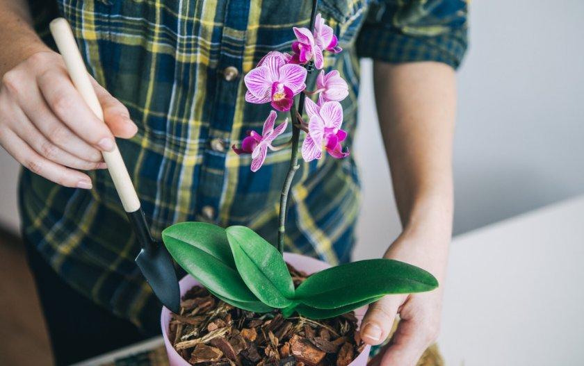 Уход за орхидеей после посадки