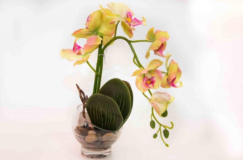 Картинки орхидеи в вазе