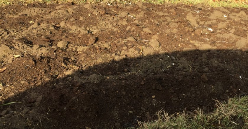 Перекопанный участок под посадку винограда