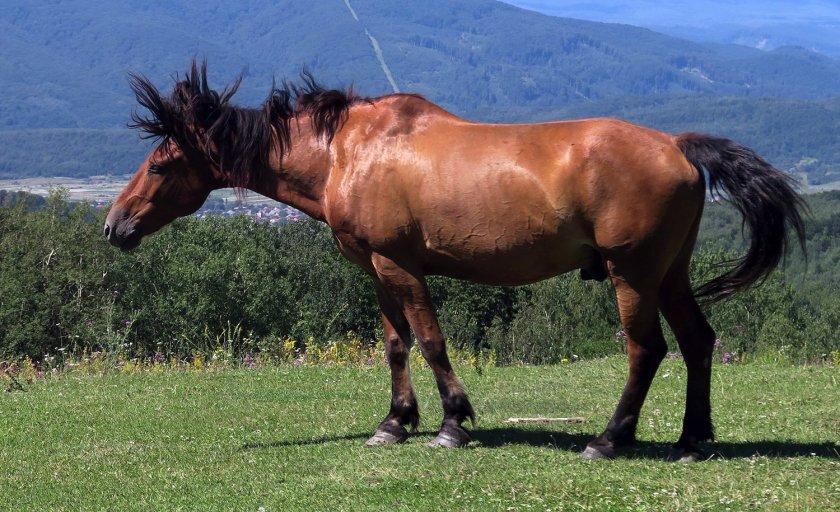 Уход лошадью тинкер