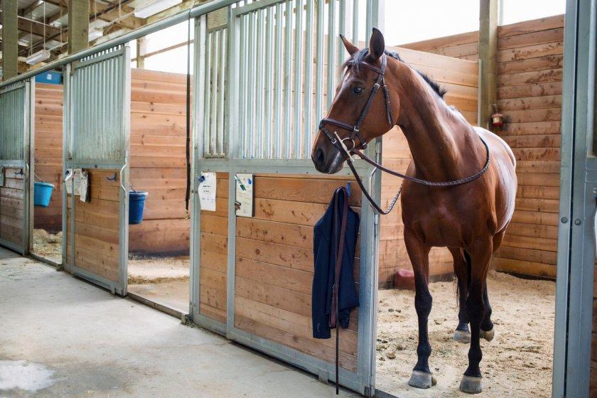 Конюшня для ганноверской породы лошадей