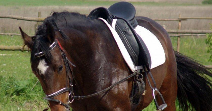 Лошадь с седлом