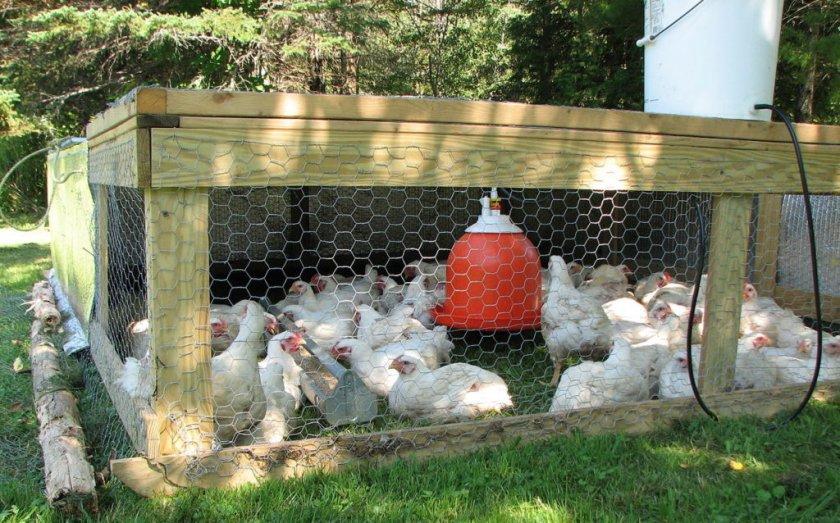 Клетки для цыплят