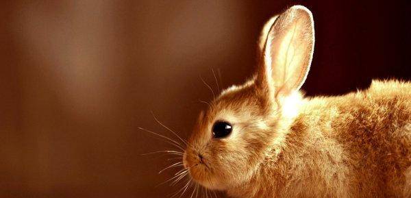 Почему кролики не пьют воду