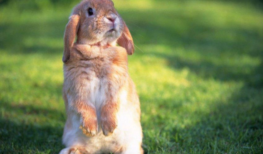 Напуганный кролик