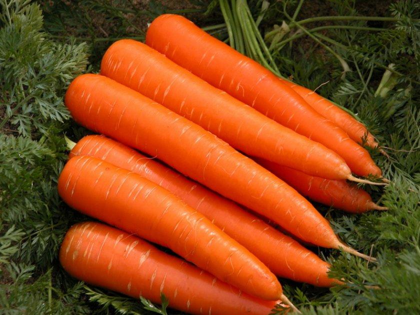 Урожай моркови Королева осени