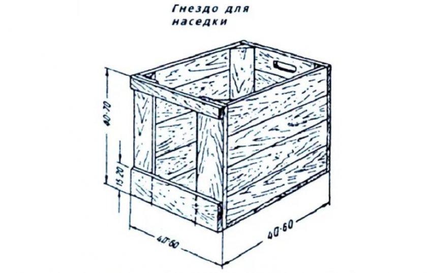 Оптимальные размеры гнезда для наседки