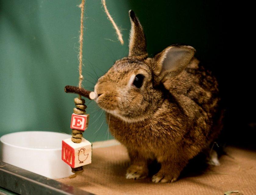 Кролик играется
