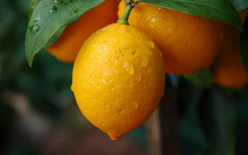 Лимонаджи
