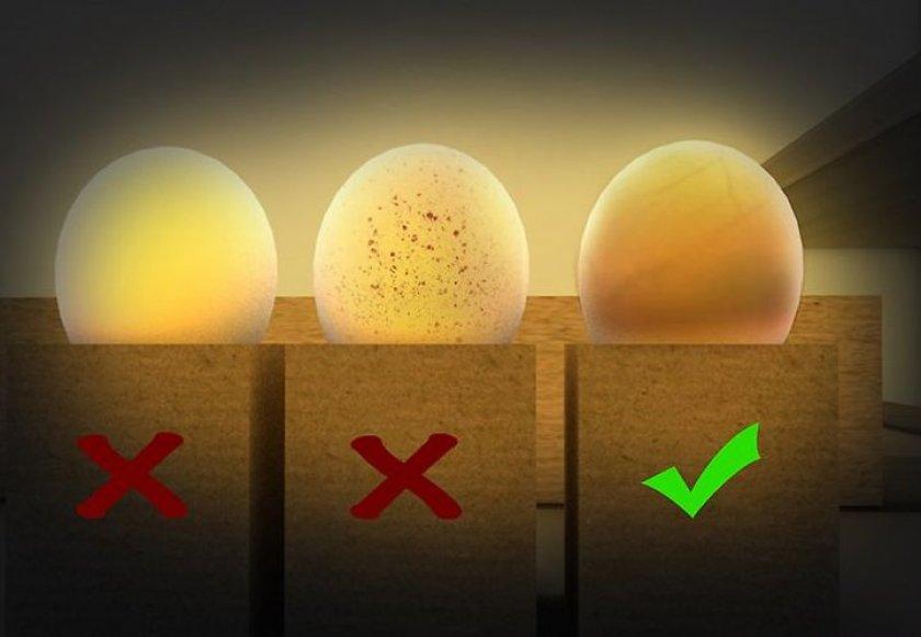 Как выявить приостановленный в развитии эмбрион