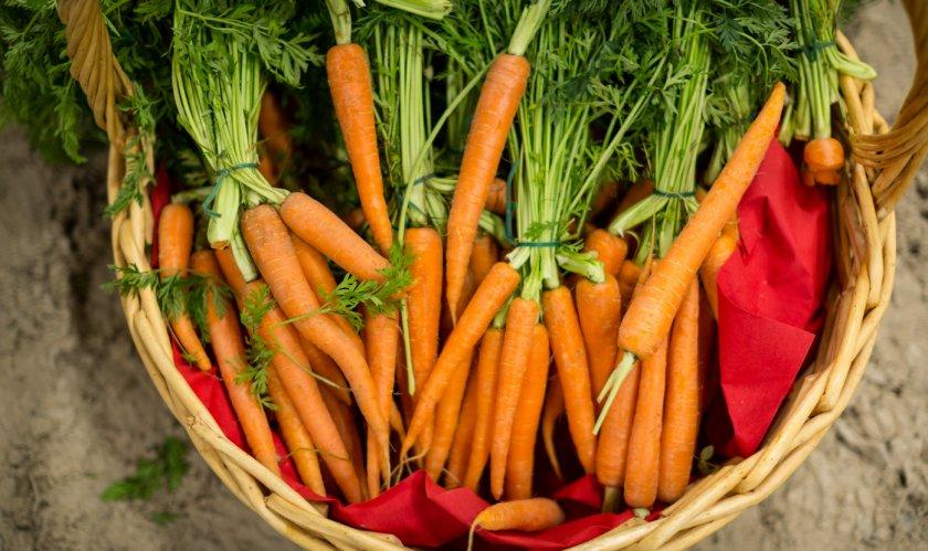 Польза моркови для организма женщин