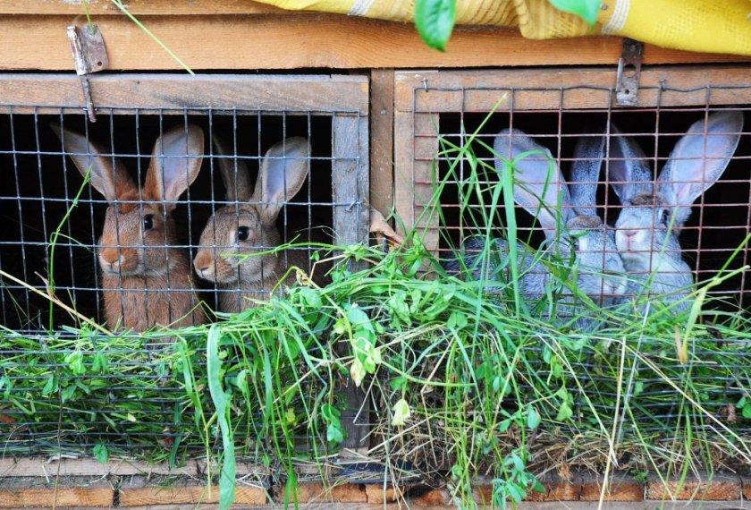Уход за кроликами в шедах