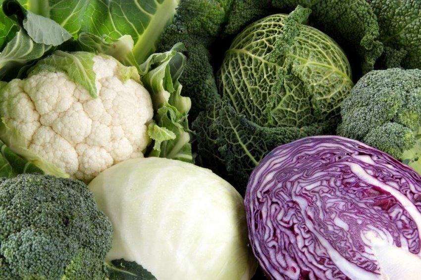 Нормы потребления капусты
